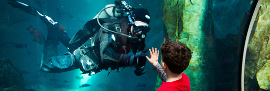 http://vjs-images.s3.amazonaws.com/blogs/Oregon%20Coast%20Aquarium%20Inspires%20People%20To%20Love%20Our%20Oceans%20/oregon-coast-aquarium_6022b0.jpg